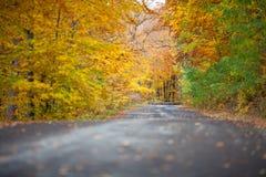 Ζωηρόχρωμα δέντρα φθινοπώρου κοντά στο δρόμο στοκ φωτογραφία