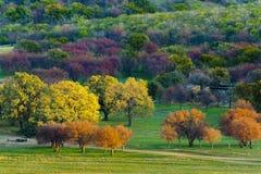 ζωηρόχρωμα δέντρα φθινοπώρου Στοκ Φωτογραφίες