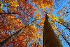 ζωηρόχρωμα δέντρα φθινοπώρου Στοκ Φωτογραφία