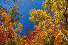 Ζωηρόχρωμα δέντρα φυλλώματος Στοκ εικόνα με δικαίωμα ελεύθερης χρήσης