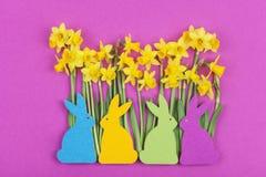 Ζωηρόχρωμα αισθητά λαγουδάκια Πάσχας μπροστά από τα daffodils Στοκ Εικόνες