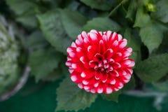Ζωηρόχρωμα ανθίζοντας άγρια λουλούδια άνοιξη κατά την άποψη Στοκ Φωτογραφίες