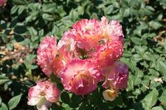 Ζωηρόχρωμα ανθίζοντας άγρια λουλούδια άνοιξη κατά την άποψη Στοκ Εικόνες