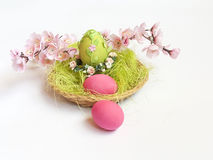 Ζωηρόχρωμα αυγά Πάσχας στους πράσινους και ρόδινους ανθίζοντας κλάδους Στοκ Εικόνες