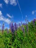 Ζωηρόχρωμα βουνά θερινών λιβαδιών Στοκ εικόνες με δικαίωμα ελεύθερης χρήσης