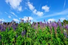 Ζωηρόχρωμα βουνά θερινών λιβαδιών Στοκ φωτογραφία με δικαίωμα ελεύθερης χρήσης