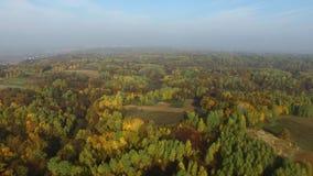 Ζωηρόχρωμα δάση, φθινόπωρο, εναέρια άποψη απόθεμα βίντεο