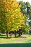 ζωηρόχρωμα δέντρα σφενδάμν&omicr Στοκ φωτογραφία με δικαίωμα ελεύθερης χρήσης