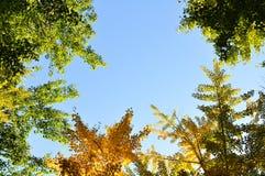 Ζωηρόχρωμα δέντρα φθινοπώρου από τη χαμηλή γωνία που βλασταίνονται με το υπόβαθρο μπλε ουρανού στοκ εικόνα