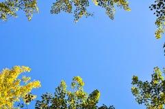Ζωηρόχρωμα δέντρα φθινοπώρου από τη χαμηλή γωνία που βλασταίνονται με το υπόβαθρο μπλε ουρανού στοκ εικόνες