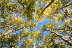 Ζωηρόχρωμα δέντρα φθινοπώρου από τη χαμηλή γωνία που βλασταίνονται με το υπόβαθρο μπλε ουρανού στοκ φωτογραφίες