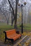Ζωηρόχρωμα δέντρα φθινοπώρου με το κιτρινισμένο φύλλωμα στο πάρκο φθινοπώρου Στοκ φωτογραφία με δικαίωμα ελεύθερης χρήσης