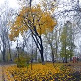 Ζωηρόχρωμα δέντρα φθινοπώρου με το κιτρινισμένο φύλλωμα στο πάρκο φθινοπώρου Στοκ Εικόνα