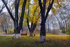 Ζωηρόχρωμα δέντρα φθινοπώρου με το κιτρινισμένο φύλλωμα στο πάρκο φθινοπώρου Στοκ Φωτογραφίες