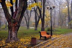 Ζωηρόχρωμα δέντρα φθινοπώρου με το κιτρινισμένο φύλλωμα στο πάρκο φθινοπώρου Στοκ εικόνες με δικαίωμα ελεύθερης χρήσης