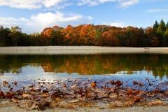 ζωηρόχρωμα δέντρα φύλλων φθ& Στοκ Εικόνες