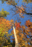 ζωηρόχρωμα δέντρα Στοκ φωτογραφία με δικαίωμα ελεύθερης χρήσης