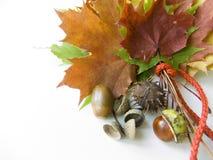 ζωηρόχρωμα δώρα φθινοπώρο&upsil Στοκ Εικόνες