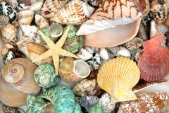 ζωηρόχρωμα θαλασσινά κοχύλια Στοκ Φωτογραφία