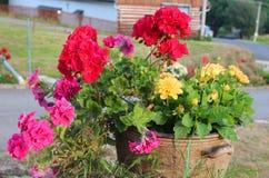 Ζωηρόχρωμα θερινά λουλούδια Στοκ εικόνα με δικαίωμα ελεύθερης χρήσης
