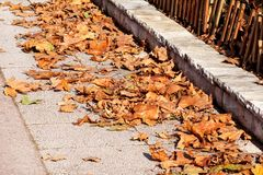 Ζωηρόχρωμα και καφετιά φύλλα φθινοπώρου, σύσταση, υλικό και υπόβαθρο Αφήνει τα φύλλα από τα δέντρα, κλείνει επάνω Στοκ εικόνες με δικαίωμα ελεύθερης χρήσης
