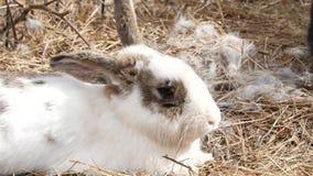 Ζωηρόχρωμα κουνέλια σε ένα αγρόκτημα ζωολογικός κήπος κατοικίδιων ζώων σε επαφή 4K φιλμ μικρού μήκους