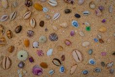 Ζωηρόχρωμα κοχύλια στο αμμώδες υπόβαθρο παραλιών στοκ φωτογραφίες