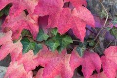 Ζωηρόχρωμα κόκκινα και πράσινα φύλλα φθινοπώρου Στοκ Εικόνες