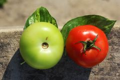 Ζωηρόχρωμα κόκκινα και πράσινα χρώματα ντοματών στοκ εικόνες με δικαίωμα ελεύθερης χρήσης