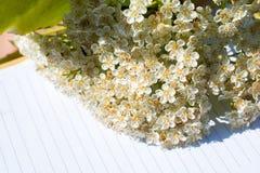 Ζωηρόχρωμα λουλούδια άνοιξη σε ένα σημειωματάριο Στοκ Εικόνες