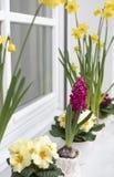 Ζωηρόχρωμα λουλούδια άνοιξη σε μια στρωματοειδή φλέβα παραθύρων στοκ εικόνα