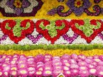 Ζωηρόχρωμα λουλούδια ανθών Στοκ φωτογραφίες με δικαίωμα ελεύθερης χρήσης
