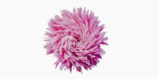 Ζωηρόχρωμα λουλούδια αστέρων που διαμορφώνουν ένα πλαίσιο σε ένα υπόβαθρο, ελάχιστη έννοια, τοπ άποψη, διάστημα αντιγράφων για το στοκ εικόνες