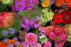 ζωηρόχρωμα λουλούδια μα& Στοκ Εικόνες