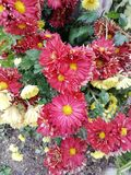 ζωηρόχρωμα λουλούδια με τα φυσικά χρώματα στην περίπτωση και το κρύο τους στοκ εικόνες