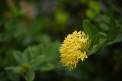 Ζωηρόχρωμα λουλούδια με τις πτώσεις του νερού μετά από τη βροχή Στοκ Φωτογραφίες