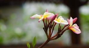 Ζωηρόχρωμα λουλούδια με τις πτώσεις του νερού μετά από τη βροχή Στοκ εικόνες με δικαίωμα ελεύθερης χρήσης