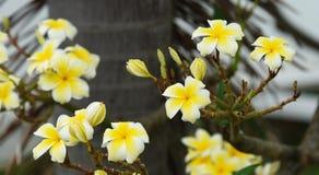 Ζωηρόχρωμα λουλούδια με τις πτώσεις του νερού μετά από τη βροχή Στοκ εικόνα με δικαίωμα ελεύθερης χρήσης