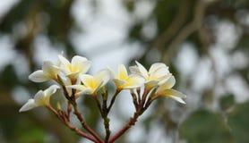 Ζωηρόχρωμα λουλούδια με τις πτώσεις του νερού μετά από τη βροχή Στοκ φωτογραφία με δικαίωμα ελεύθερης χρήσης