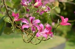 ζωηρόχρωμα λουλούδια Ομάδα λουλουδιού Ομάδα ρόδινων λουλουδιών Στοκ φωτογραφία με δικαίωμα ελεύθερης χρήσης