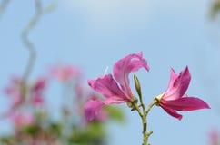 ζωηρόχρωμα λουλούδια Ομάδα λουλουδιού Ομάδα ρόδινων λουλουδιών Στοκ εικόνα με δικαίωμα ελεύθερης χρήσης