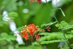 ζωηρόχρωμα λουλούδια Ομάδα λουλουδιού Ομάδα ρόδινων λουλουδιών Στοκ Φωτογραφίες