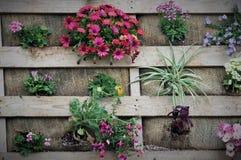 Ζωηρόχρωμα λουλούδια στις ξύλινες ακτίνες Στοκ Εικόνες