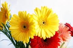 Ζωηρόχρωμα λουλούδια στο άσπρο υπόβαθρο στοκ φωτογραφίες