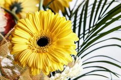 Ζωηρόχρωμα λουλούδια στο άσπρο υπόβαθρο στοκ εικόνες