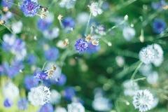 Ζωηρόχρωμα λουλούδια στο μαλακό ύφος χρώματος και θαμπάδων για το υπόβαθρο Στοκ Εικόνες