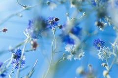 Ζωηρόχρωμα λουλούδια στο μαλακό ύφος χρώματος και θαμπάδων για το υπόβαθρο Στοκ Φωτογραφίες