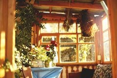 Ζωηρόχρωμα λουλούδια φθινοπώρου στο παλαιό summerhouse στοκ εικόνα