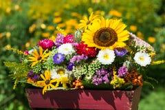 Ζωηρόχρωμα λουλούδια φθινοπώρου Στοκ Εικόνα
