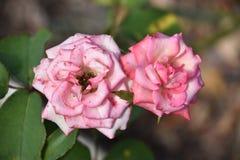 ζωηρόχρωμα λουλούδια Στοκ εικόνα με δικαίωμα ελεύθερης χρήσης